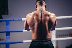 Rear view of male boxer standing looking away. Fit man wearing boxing gloves. Rear view of muscular young male boxer standing looking away. Fit young man wearing Stock Images
