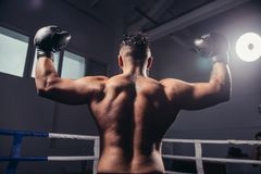Rear view of male boxer standing looking away. Fit man wearing boxing gloves. Rear view of muscular young male boxer standing looking away. Fit young man wearing Stock Image