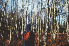 Rear View of Man Amidst Trees in Forest Against Sky Stock Image