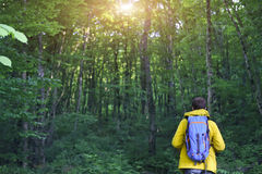 Rear view of man with backpack hiking in forest. Rear view of man with backpack hiking in deep forest Royalty Free Stock Photography