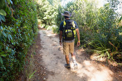 Rear view of man with backpack walking in the forest Royalty Free Stock Image