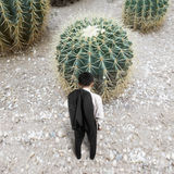 Rear view of man with cactus royalty free stock image