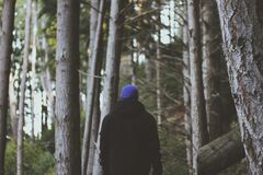 Rear View of Man in Forest Royalty Free Stock Images