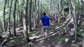 Man running in the forest on a sunny day 4k. Rear view of man running in the forest on a sunny day 4k stock footage