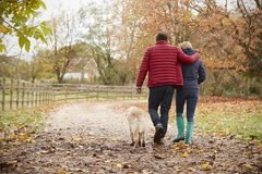 Rear View Of Mature Couple On Autumn Walk With Labrador Royalty Free Stock Photo