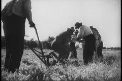 Rear view of men plowing field