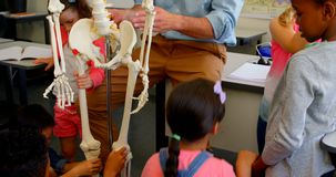 Multi-ethnic school kids fixing skeleton model in classroom at school 4k. Rear view of multi-ethnic school kids fixing skeleton model in classroom at school stock video