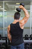 Rear view of a muscular man exercising with dumbbell Stock Photography