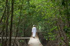 Rear view of old muslim man in traditional clothing walking through mangrove forest to islamic mosque. Peaceful place in the holy royalty free stock photos