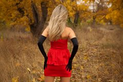Rear view of pretty young girl in red dress. In autumn wood Stock Images
