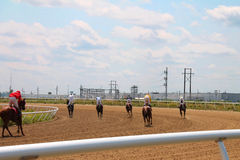 Rear View of Race Horses After Race Royalty Free Stock Photography