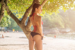 Rear view of sexy young woman in perfect shape wearing bikini standing near the tree on sandy beach with blurred Royalty Free Stock Images