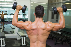 Rear view of shirtless muscular man exercising with dumbbells Royalty Free Stock Image