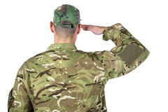 Rear view of soldier saluting. On white background Royalty Free Stock Image