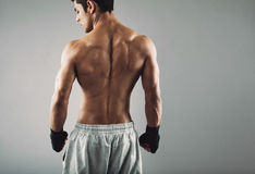 Rear view of strong young male boxer. Fitness male model wearing boxing gloves standing on grey background royalty free stock images