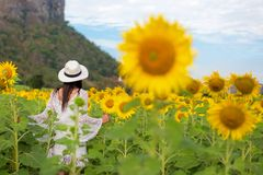 Rear view of travel lifestyle women standing and relax in sunflower field, in summer day and happy vocations royalty free stock photos