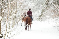 Two riders on the brown horses in the snow, rear view royalty free stock image