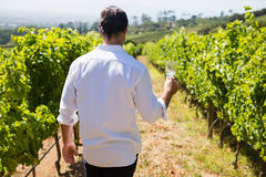 Rear view of vintner holding glass of wine in vineyard Stock Image
