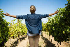 Rear view of vintner standing with arms outstretched in vineyard. On a sunny day Stock Photo