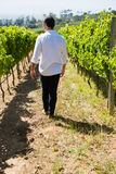 Rear view of vintner walking in vineyard Royalty Free Stock Photo