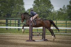 Rear view of woman and horse jumping. Rear view of an woman and bay horse jumping a vertical plank royalty free stock photography