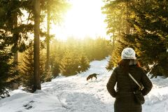 Rear View of Woman in Snow Covered Forest Stock Images