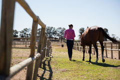 Rear view of woman walking with horse at ranch Stock Photo
