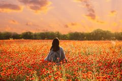 Rear view of woman walking in poppy meadow at sunset. Rear view of unrecognizable woman wearing in poncho walking in red poppy flowers meadow at sunset royalty free stock photography