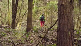 The ecologist going to the place of research. Rear view of the woman walking in a spring forest. The scientist ecologist going to the place of research stock video