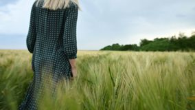 Rear view. A young blonde girl in a loose green dress leisurely walks along a green field of wheat. The concept of. Rear view. A young girl in a loose green stock footage