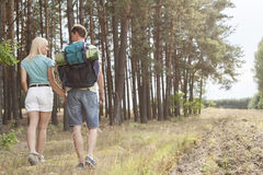 Rear view of young couple holding hands while hiking in forest Royalty Free Stock Photography