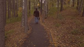 Rear view of young man walking along the autumn park lane. slow motion. Rear view of young man walking along the autumn park lane slow motion stock footage