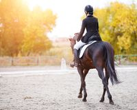 Rear view of young rider woman on bay horse. Young rider woman on bay horse performing advanced test on dressage competition. Rear view image of equestrian event Stock Photos