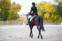 Rear view of young rider woman on bay horse. Young rider woman on bay horse performing advanced test on dressage competition. Rear view image of equestrian event Royalty Free Stock Photo