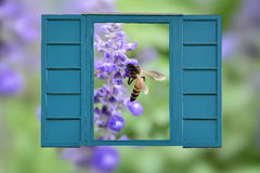 Rear window view of nature Royalty Free Stock Photography