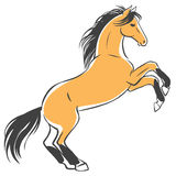 Reared horse. Vector hand drawn illustration. Graceful bay horse on a white background Royalty Free Stock Image