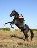 Rearing black horse Stock Image
