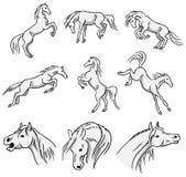 Rearing, bucking and jumping Arabian Horses Stock Photos
