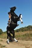 Rearing horse Royalty Free Stock Photo