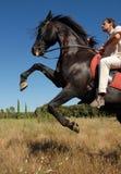 Rearing stallion Stock Photos
