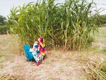 Rearview индийского фермера женщины в аграрном крае Стоковое Фото
