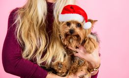Reason love christmas with pets. Ways to have merry christmas with pets. Girl attractive blonde hold dog pet pink. Background. Woman and yorkshire terrier wear stock photos