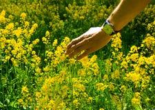 Reazioni allergiche da balzare fiori, polline Fotografie Stock Libere da Diritti
