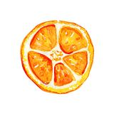 Rebanada anaranjada aislada acuarela ilustración del vector