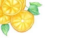 Rebanada de fruta anaranjada y de hojas verdes en el fondo blanco con el espacio para el texto libre illustration
