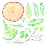 Rebanada de madera de la acuarela con las hojas verdes Imagen de archivo