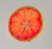 Rebanada de pomelo rosado Fotos de archivo libres de regalías