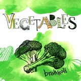 Rebanada del bróculi en blanco Fotos de archivo