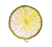 Rebanada del limón aislada Imagen de archivo