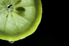 Rebanada del limón en la cual una gota del goteo del jugo Imagenes de archivo